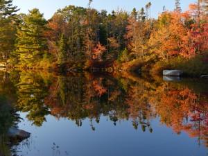 Nature is ... the ultimate artist, by Willard Larkin