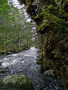 Woodens River